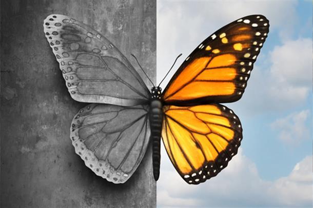 Bipolar lidelse - sommerfugl. Bilde.