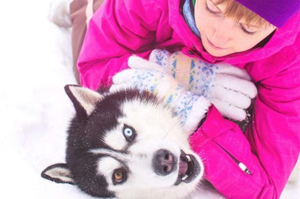 Kan det å eie hund gjøre at folk lever lenger?